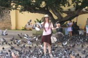 Raven and Pigeons in Puerto Rico